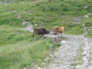 Alpen2005_-IMG_1443