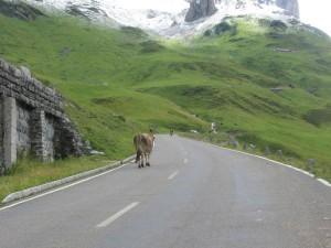 Alpen2005_-IMG_1476