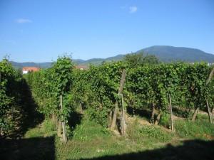 Alpen2005_-IMG_1604