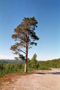 Nordkapp_-169